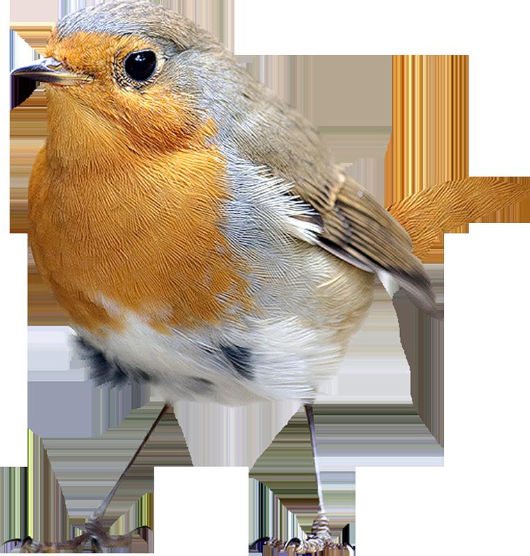 птицы на белом фоне картинки с названием известно