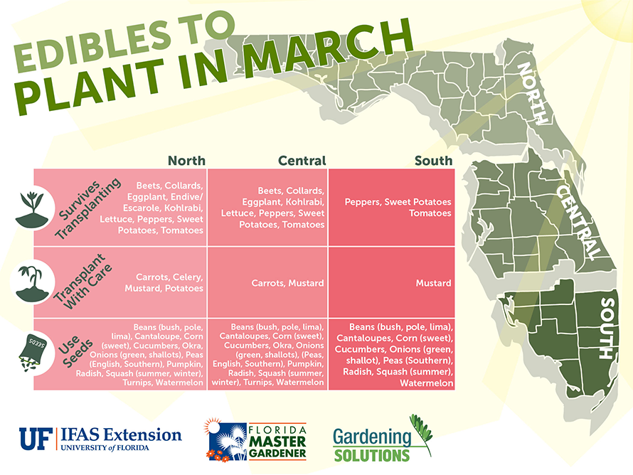 Fruits and vegetables to plant in February for Florida State
