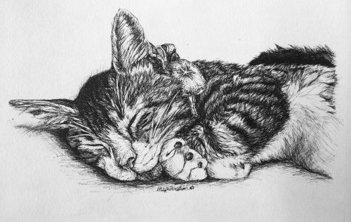 custom-cat-drawing - Kelsey Levine, artist