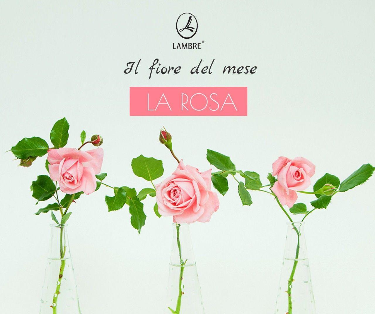 Fiori Del Mese Di Giugno il fiore del mese di giugno!!! (con immagini) | fiori, rose