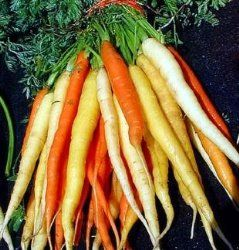 Carrot Plant How To Grow Care Growing Carrots How 400 x 300