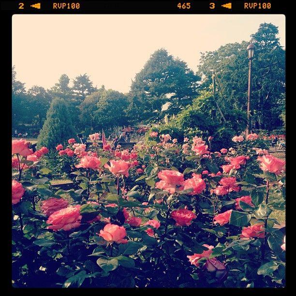 日比谷公園 第一花壇 (Hibiya Park Daiichi Kadan)