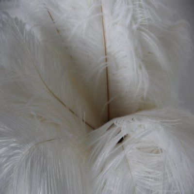 Wholesale Original 50pcs natural Reeves/'s Pheasant feathers 4-64inch//10-160cm