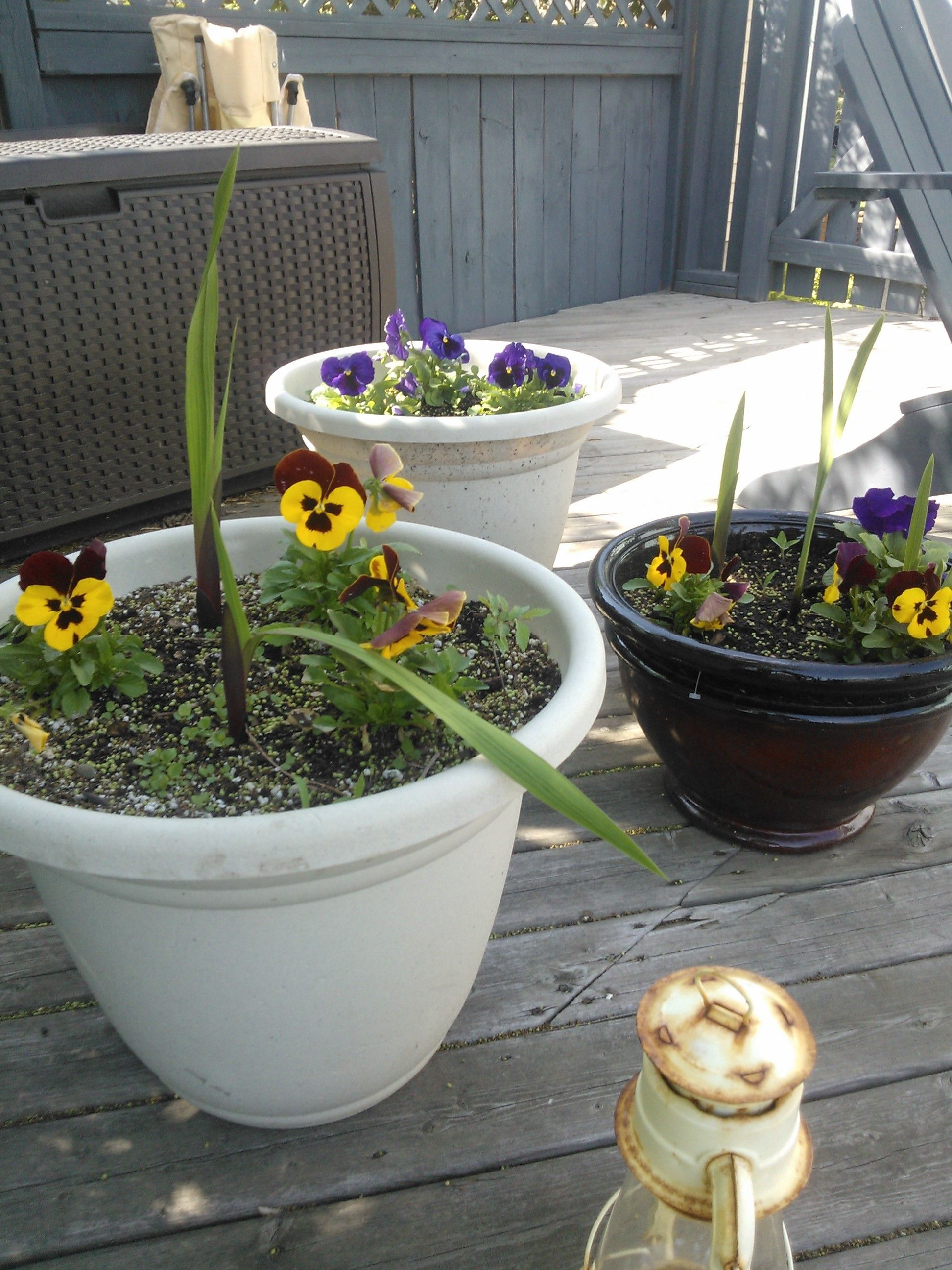 This is my new plan for the pots on the deck plant low growing this is my new plan for the pots on the deck plant low growing annuals with tall flowers that will bloom later that way i have instant colour and later izmirmasajfo