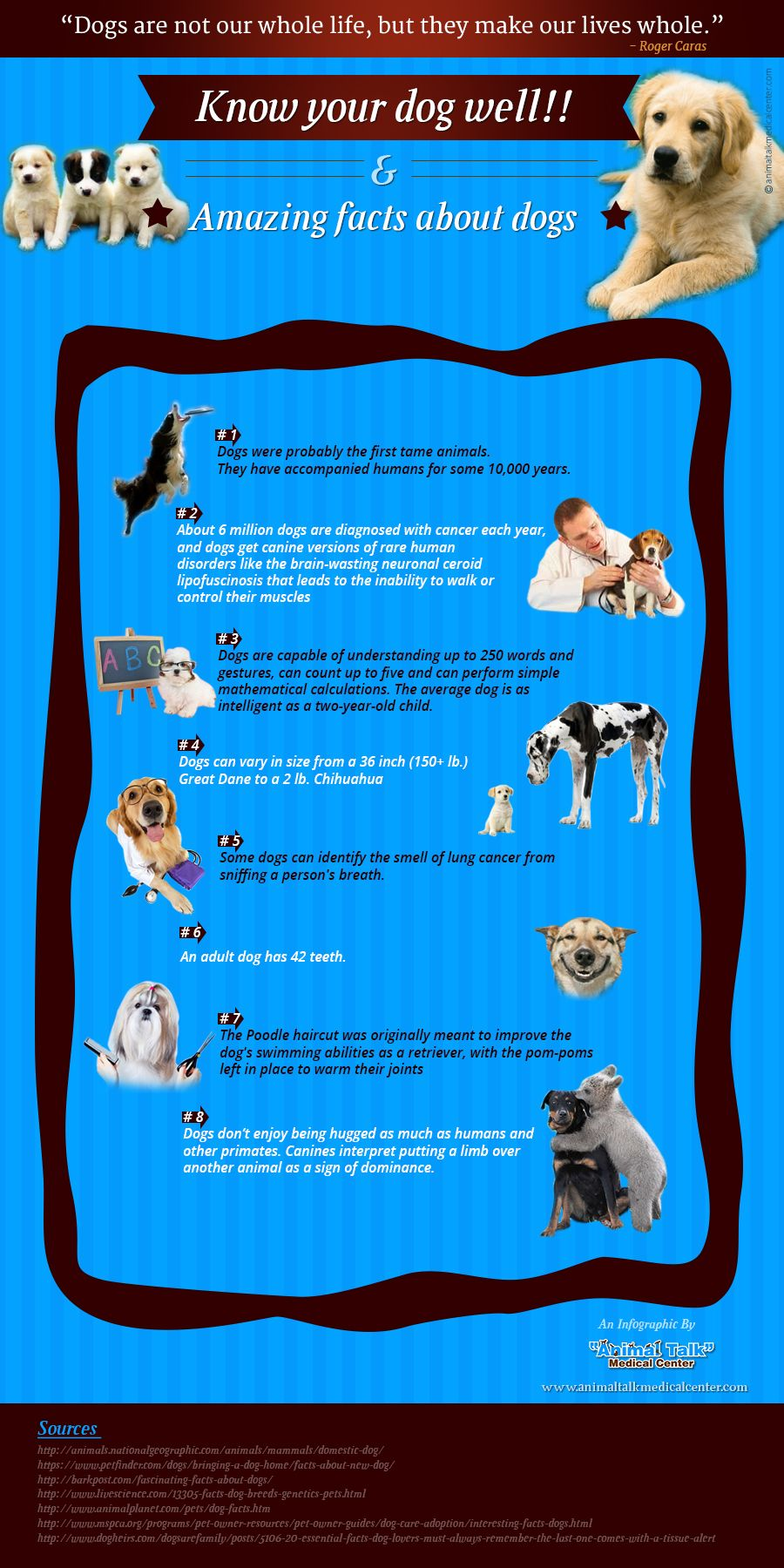 An Infographic on Rare Dog Facts This infographic is