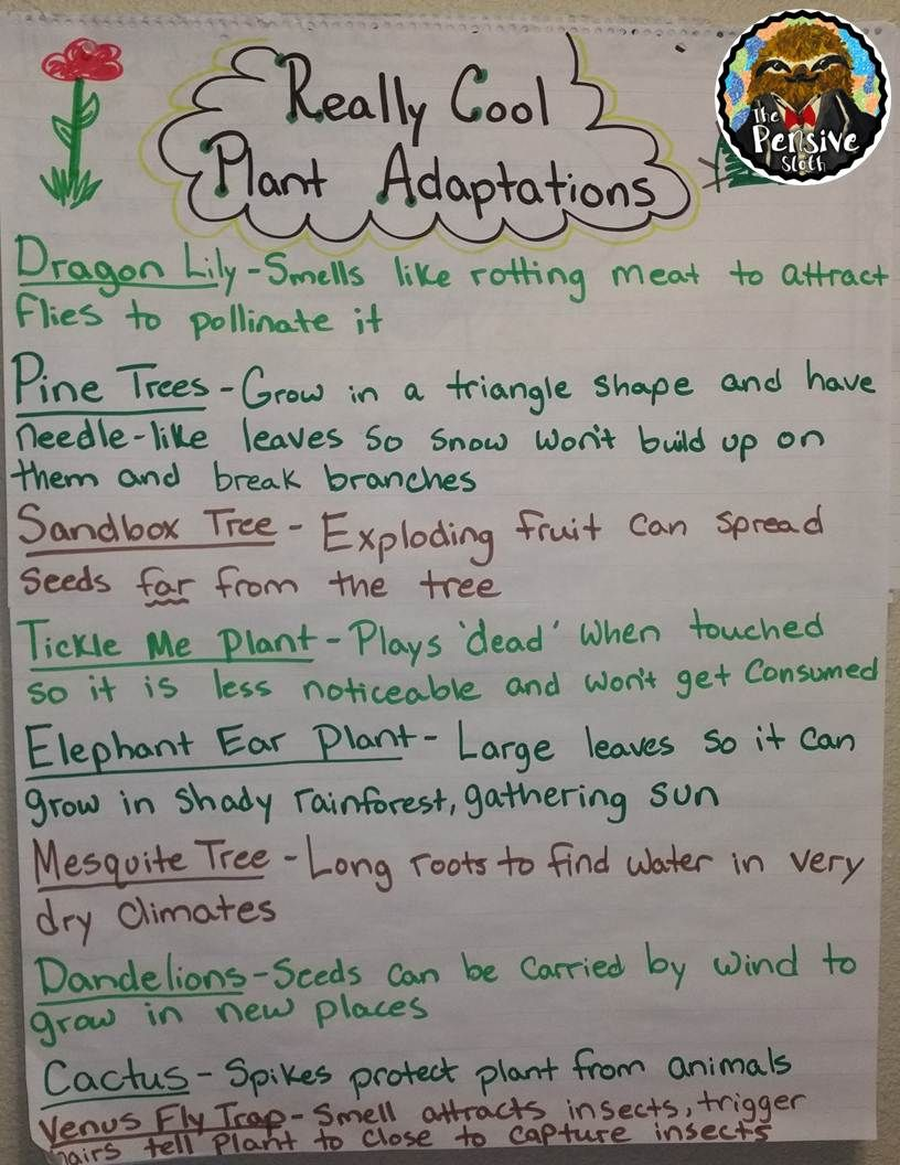 medium resolution of Just Take My Money: The Amazing Moving Plant   Science anchor charts