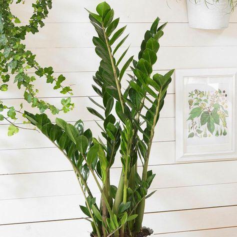 10 plantes d int rieur faciles d 39 entretien et quasi intuables deco. Black Bedroom Furniture Sets. Home Design Ideas