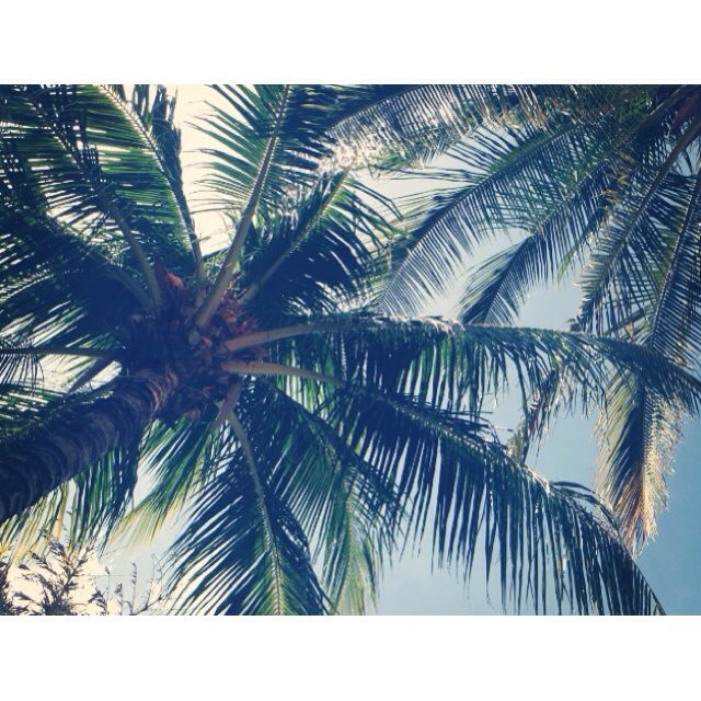 Palmtrees in Managua, Nicaragua