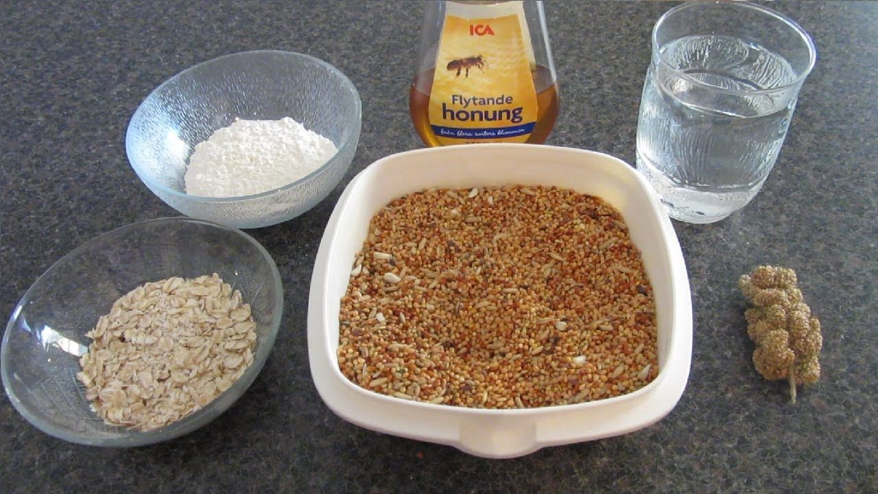How To Make HEALTHY Homemade Bird Treats! | Bird treats ...