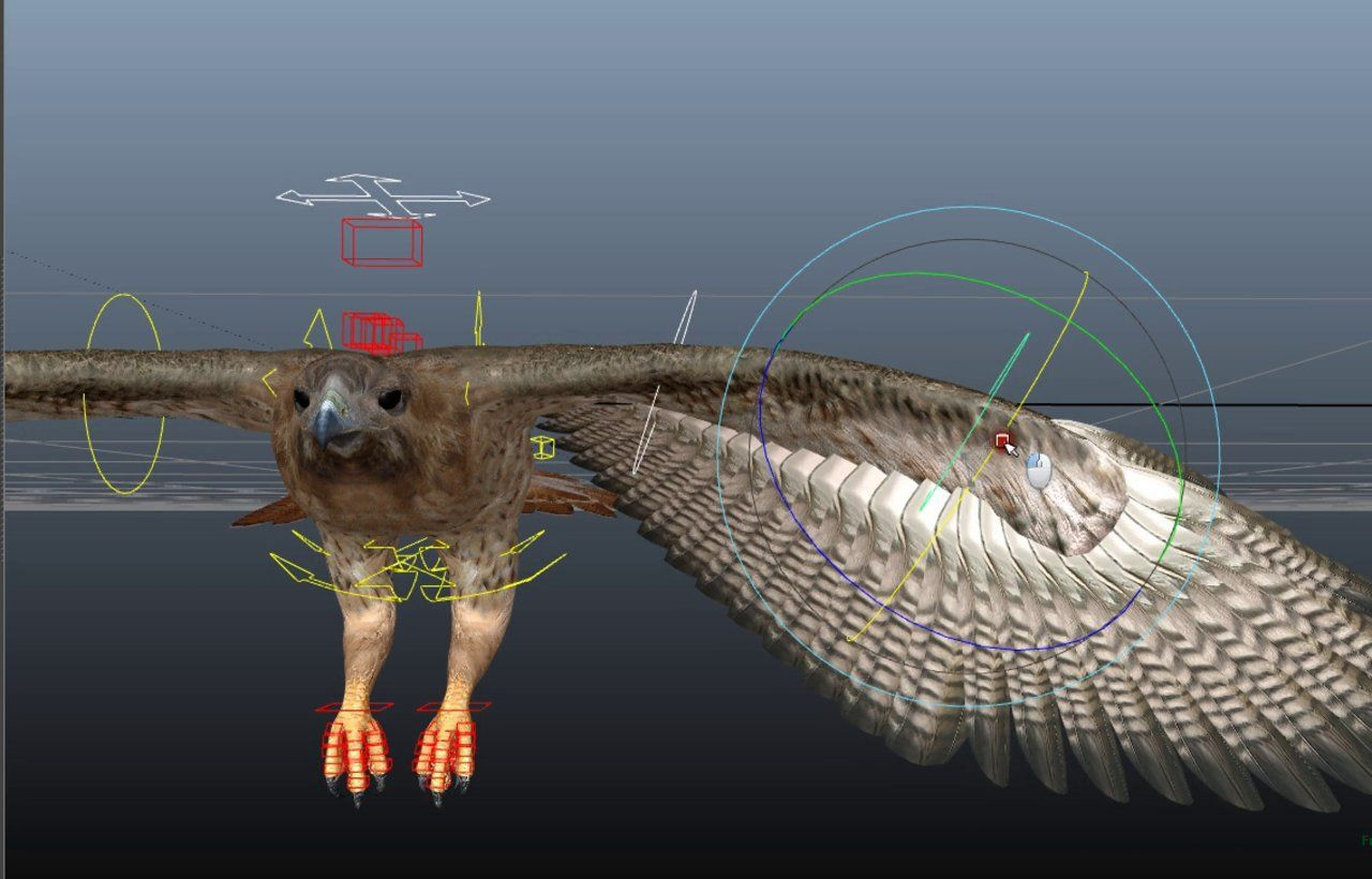 eagle rig | Rigging | Character rigging, Rigs, Animation
