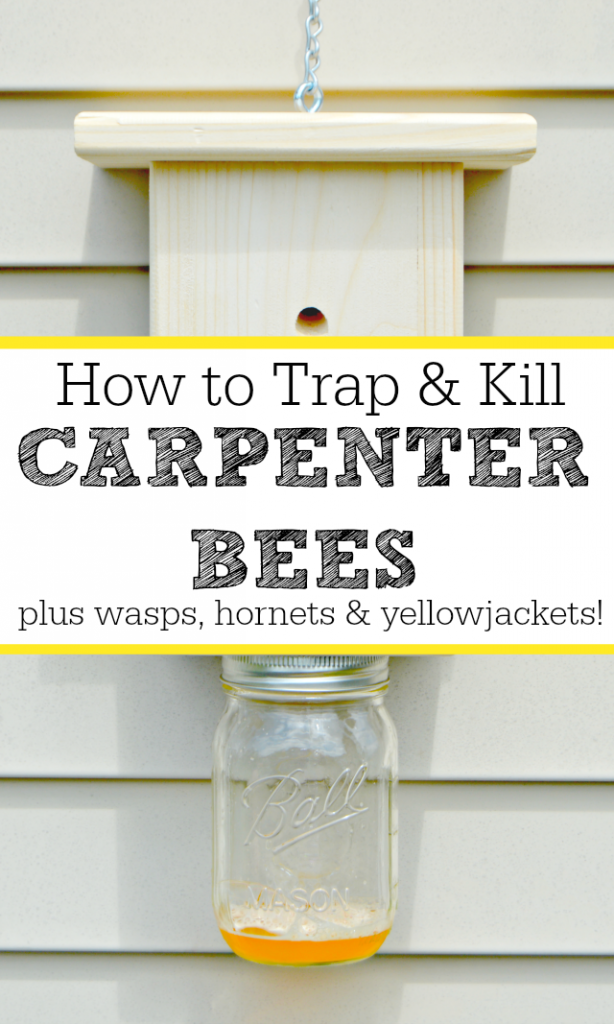 How To Trap And Kill Carpenter Bees And Wasps Too Carpenter Bee Kill Carpenter Bees Wood Bees