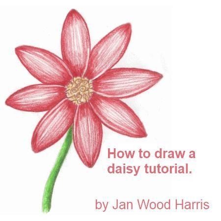 how to draw a daisy - stepstep   beautiful flowers