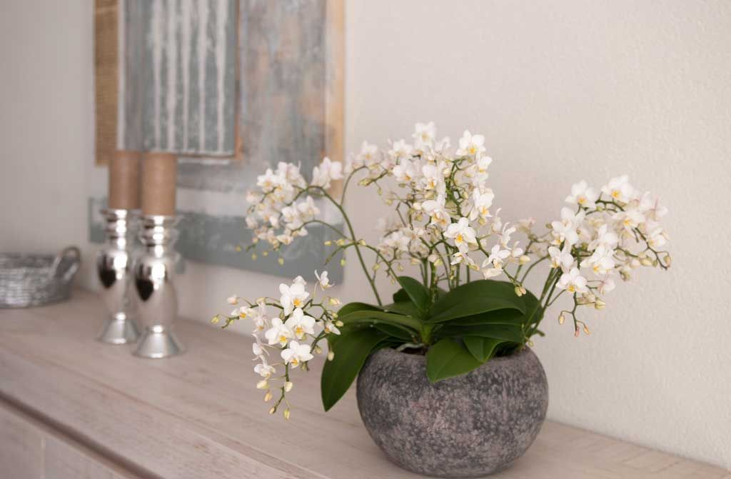 orchidee n in een grijze bolle pot op de sidetable bloemen kamerplanten pinterest interiors. Black Bedroom Furniture Sets. Home Design Ideas