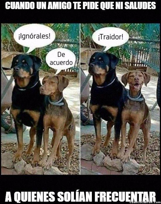 Pero Es Que Nos Caemos Bien Memes Perros Humor Divertido Sobre Animales Memes De Perros Chistosos