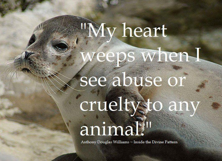 Help Stop Animal Cruelty QUOTES & POEMS PETS
