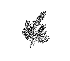 Heathers PNG and Heathers Transparent Clipart Free Download. - CleanPNG /  KissPNG