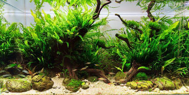 Aquascape 180l Planted Aquarium Live Aquarium Plants Plants