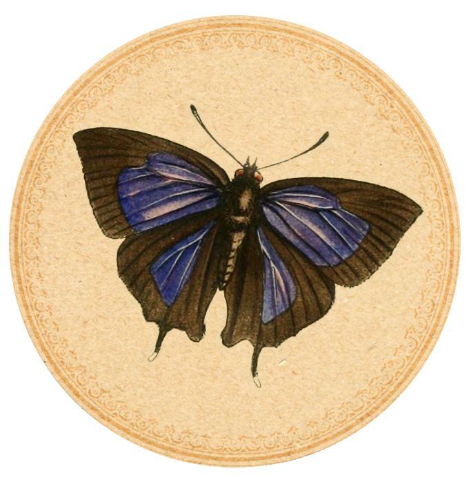 Blue-Butterfly-01 Digital Goodie free printable on threelittlekittens.com/blog