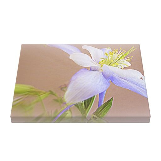 """Soft And Lovely Columbine Flower"" by Kay Novy, kkphoto1 http://www.zazzle.co.uk/soft_and_lovely_columbine_flower-192875251354462299"