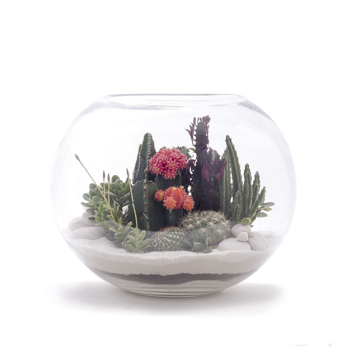 Fishbowl Large Terrarium - Plant The Future