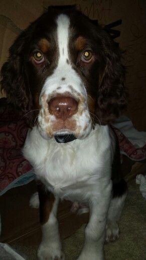 handsome pup!