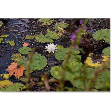 Trademark Fine Art September Lotus Canvas Art by Kurt Shaffer, Multicolor