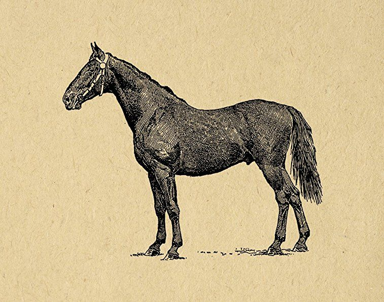 Antique Style Horse Print Farm Animal Wall Art Picture with an Old ...