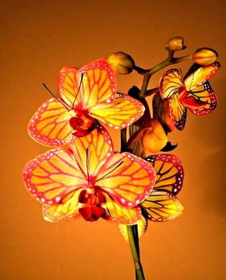 Butterfly Orchid I Loved Looking At And Picking Out My Favorite Orchids To Enj Chryssa Flowers Anggrek Bunga Seni
