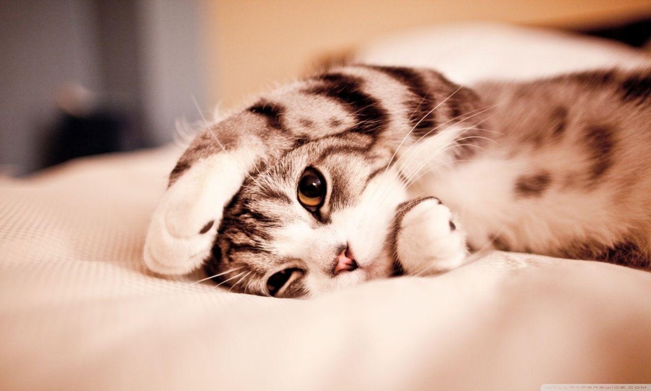 Hd wallpaper cat - Hd Wallpaper