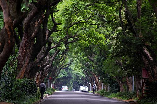 The streets of Johannesburg in South Africa. | Street trees, South africa,  Johannesburg