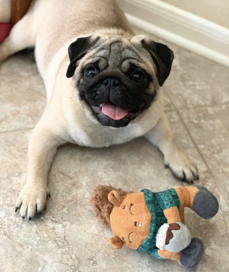 Pugs Love Bailey S Cbd A Healthy Pet Is A Happy Pet Happy Pug