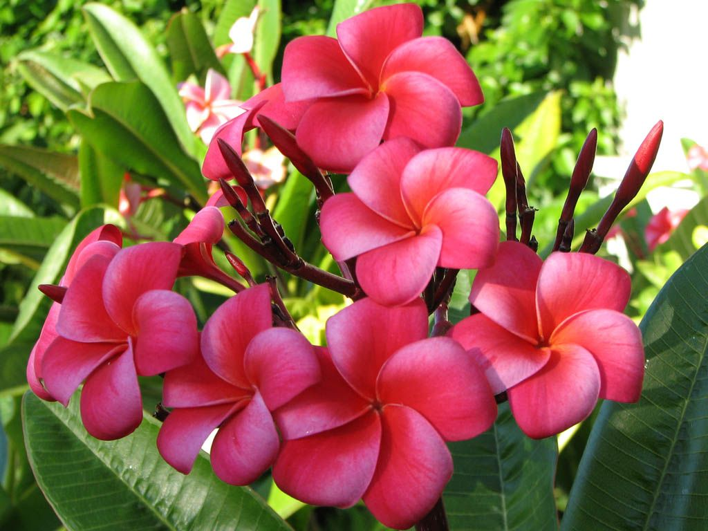Flowers Of Costa Rica Images And Names Displaying 19 Images For