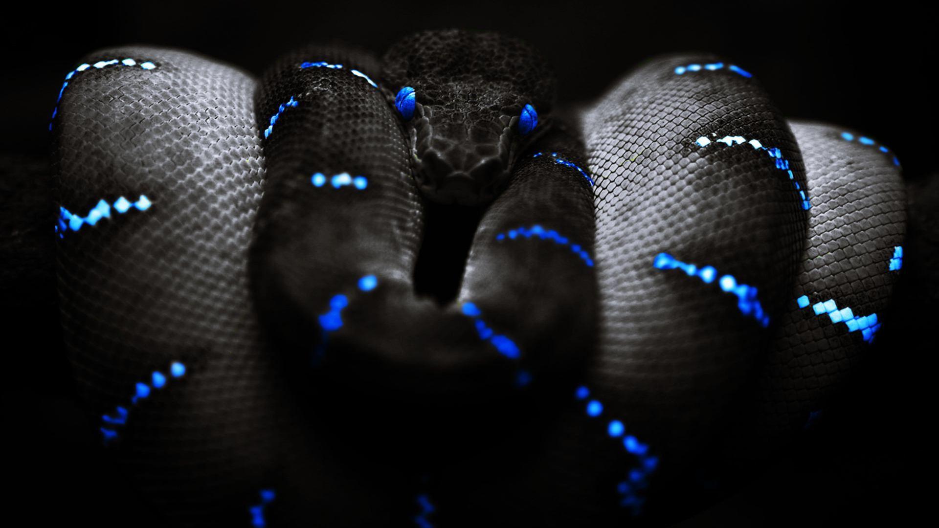 Snake With Blue Eyes Black Background Wallpaper.jpg (1920 ...
