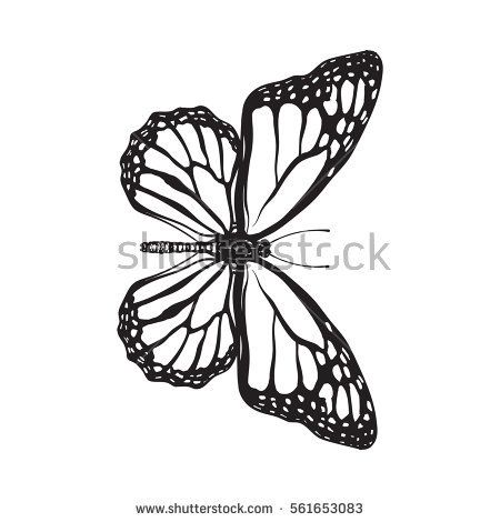 Top View Of Beautiful Monarch Butterfly Sketch Illustration