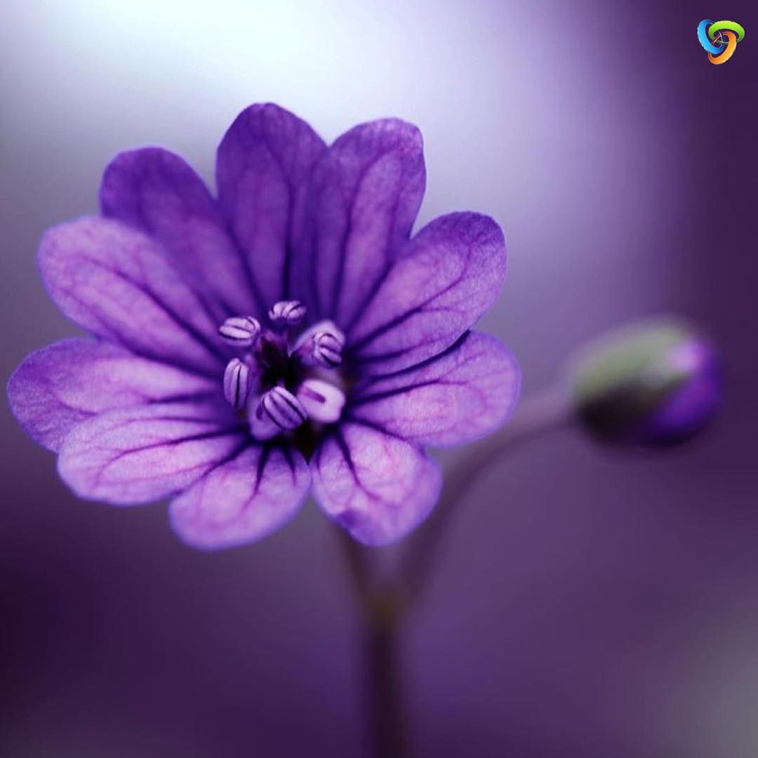 @ig_discover_petalのInstagram写真をチェック • いいね!2,620件