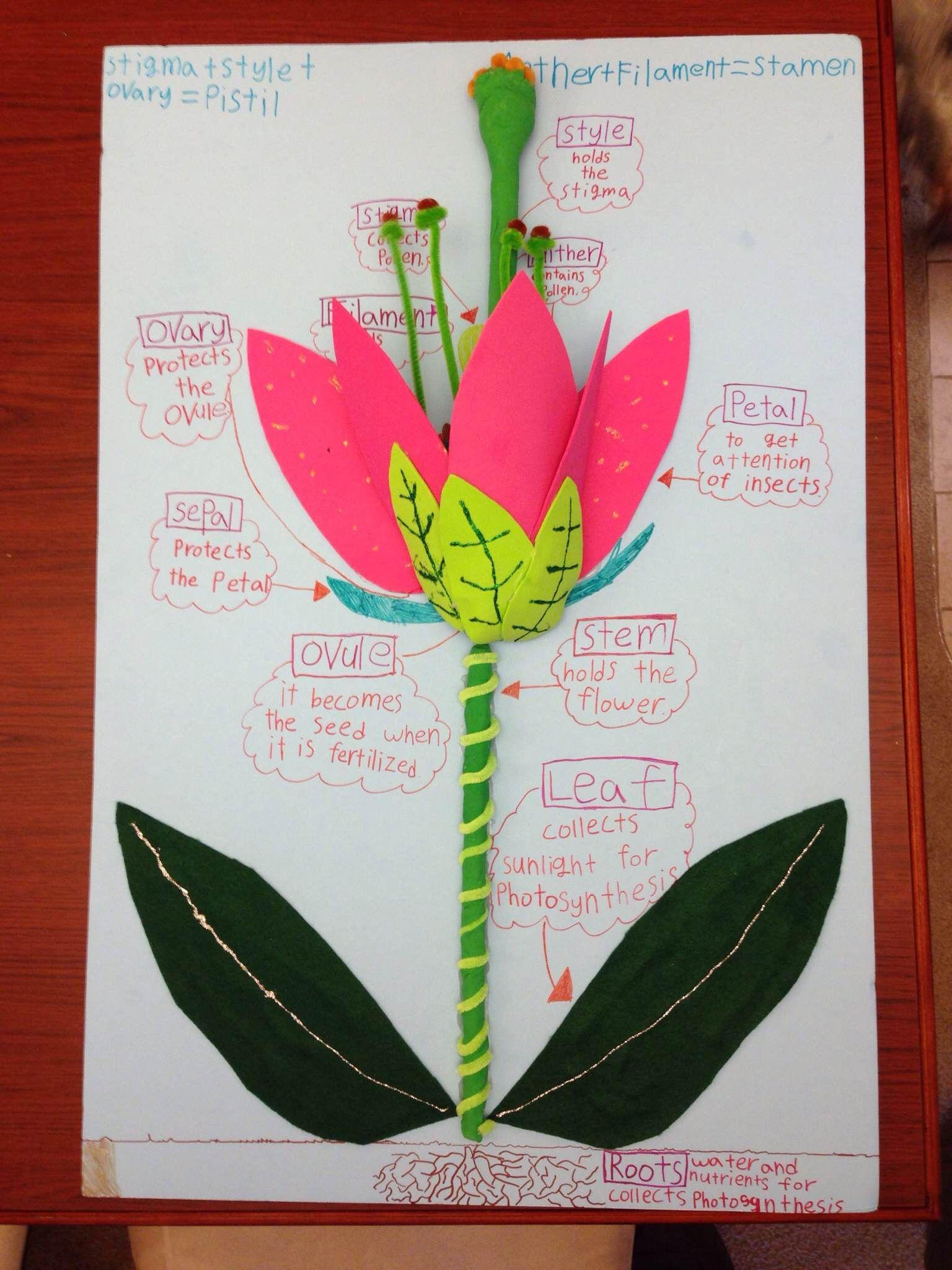 3d Flower Power
