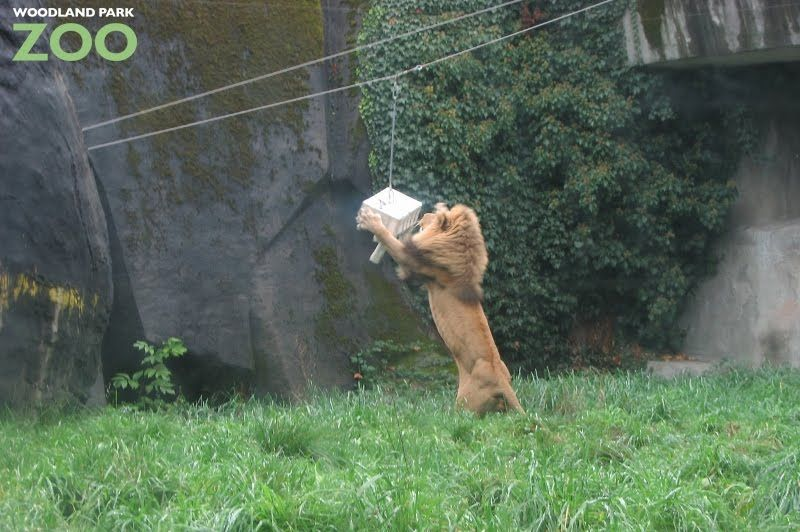 Pin By Leo811 On Animal Enrichment Animals Woodland Park Zoo Enrichment