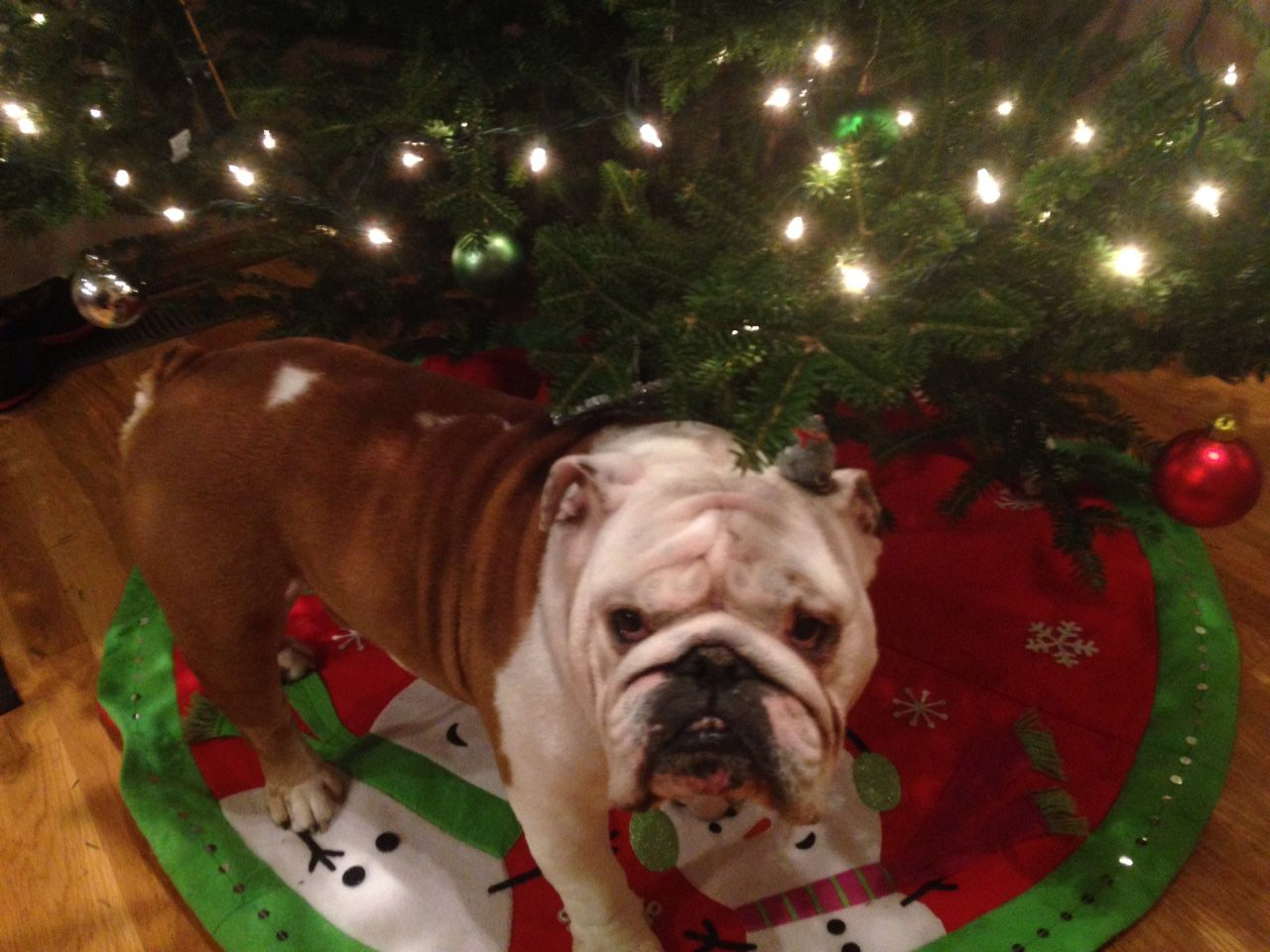 """❤""""What do you mean the Christmas tree isn't for back scratching?"""" ❤ Posted on Pickle & Harvey"""
