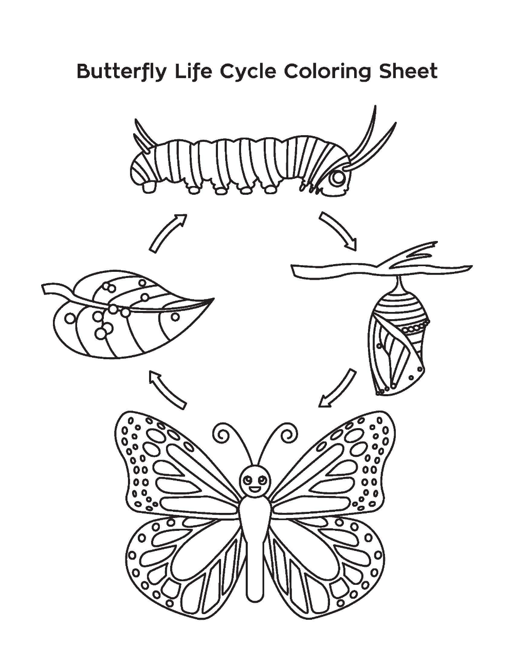 Life Cycle Of A Butterfly Google Search Butterfly Coloring Page Butterfly Life Cycle Butterfly Life Cycle Kindergarten