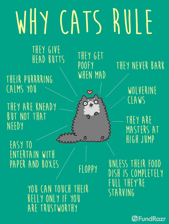 Happy National Cat Day Crazy Cats Cat Facts Cat Quotes