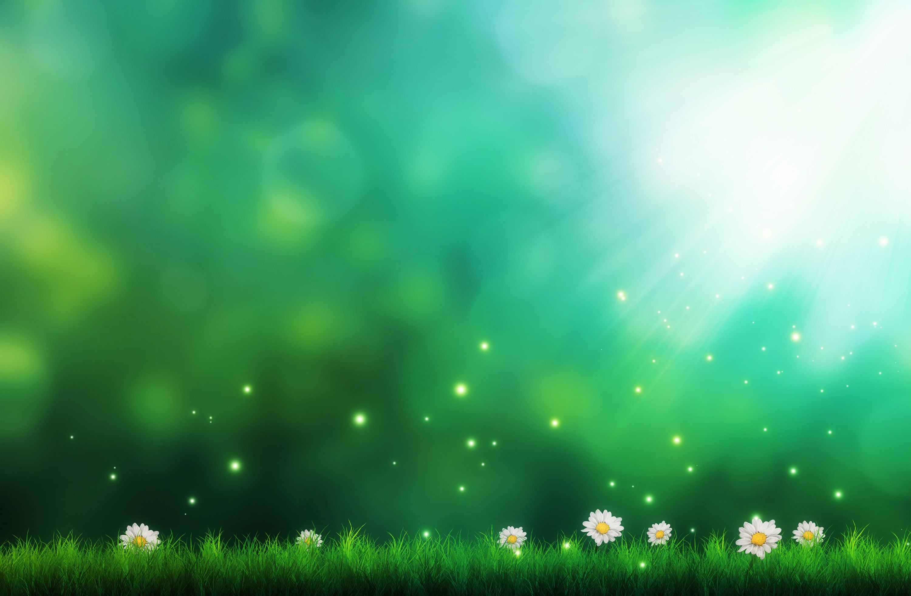 Art Flowers Daisies Grass Illustration Green Background Sparks Jpg 3000 1962 Nature Backgrounds Iphone Green Nature Background Hd Wallpaper