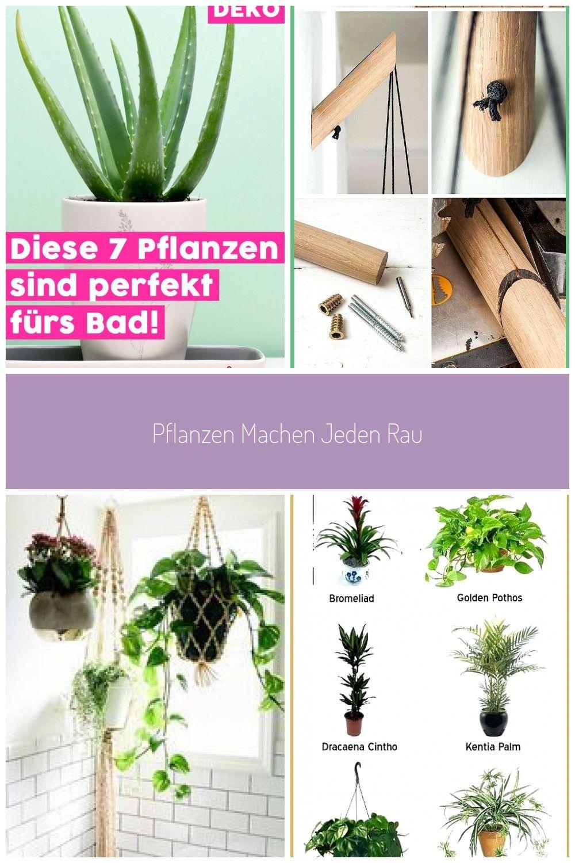 Pflanzen Machen Jeden Raum Wohnlicher Und Schner Doch Nicht Jede Pflanze Fhlt Sich In Jedem Raum Woh In 2020