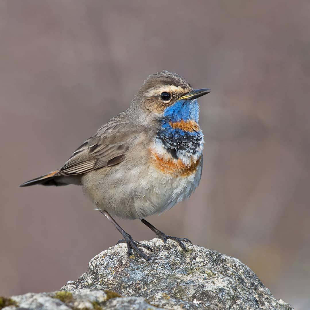 спокойно можно названия птиц нижегор области с фото этого