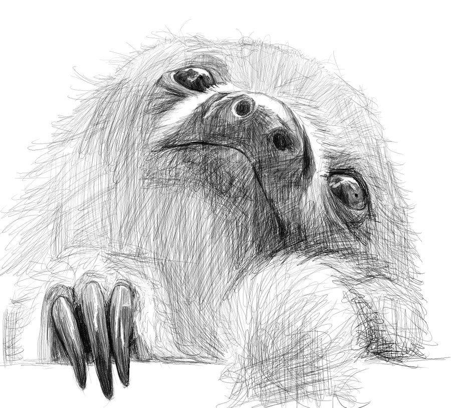 Рисунок ленивца карандашом поэтапно