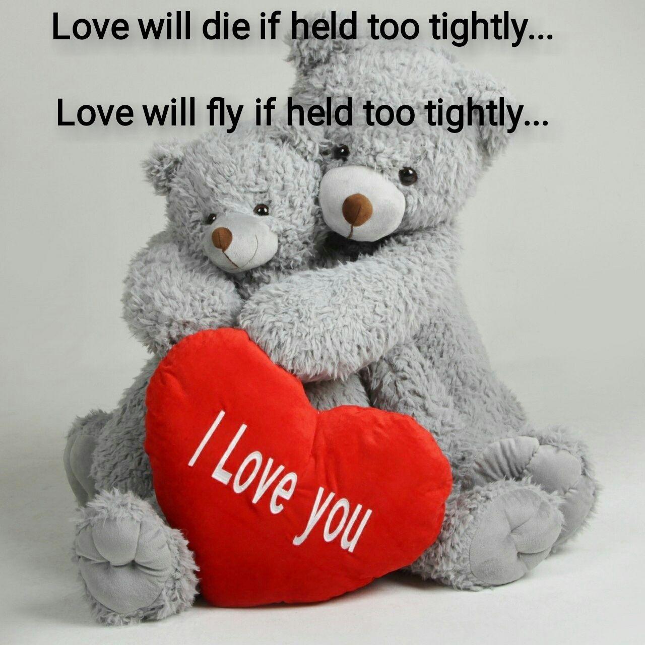 bears giant teddy bearteddy bearsvalentines - Giant Teddy Bears For Valentines Day