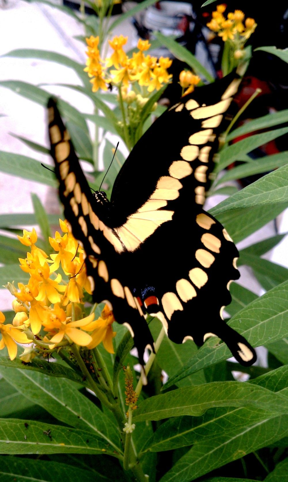 Butterfly 2011 by Kimmy Van Kooten- Photos 2.0 - Creative Thinkers International