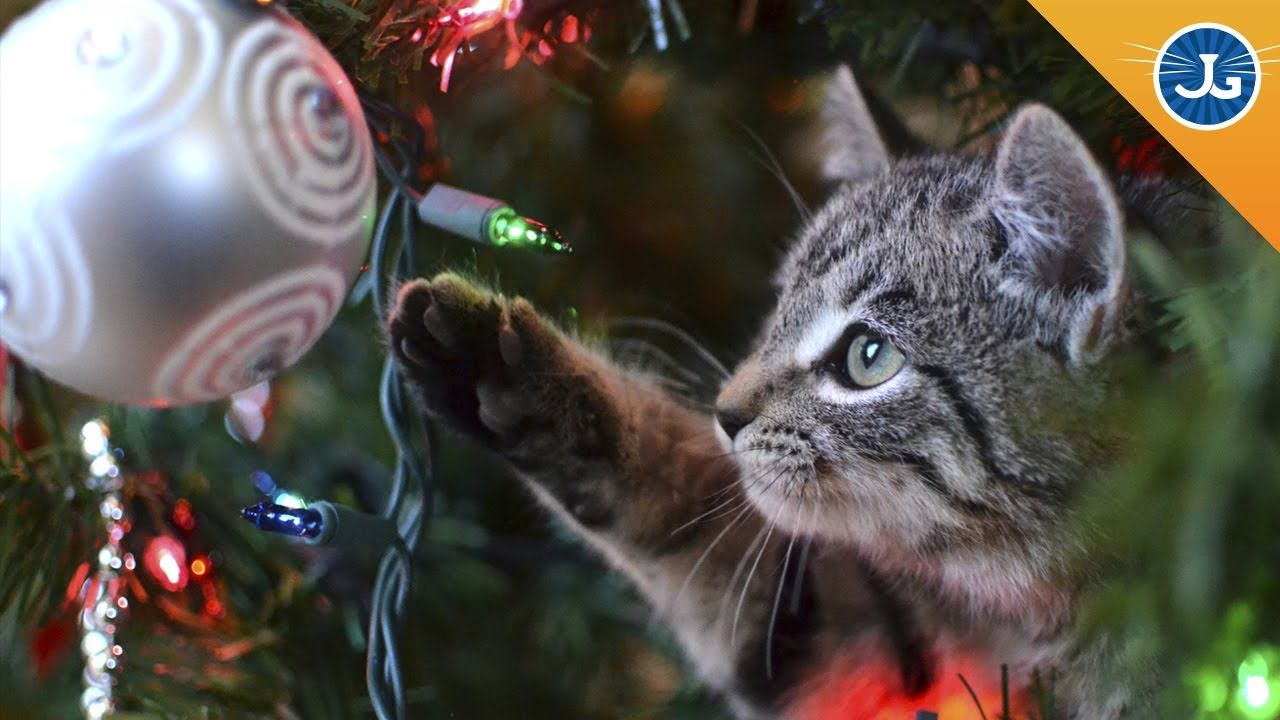 Holiday Pet Safety Tips Christmas Cat Photos Pet Holiday Christmas Cats