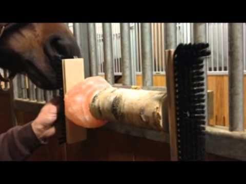 Healthy Horses Pferdespass mit Bürsten & Salzleckstein Pferdespielzeug