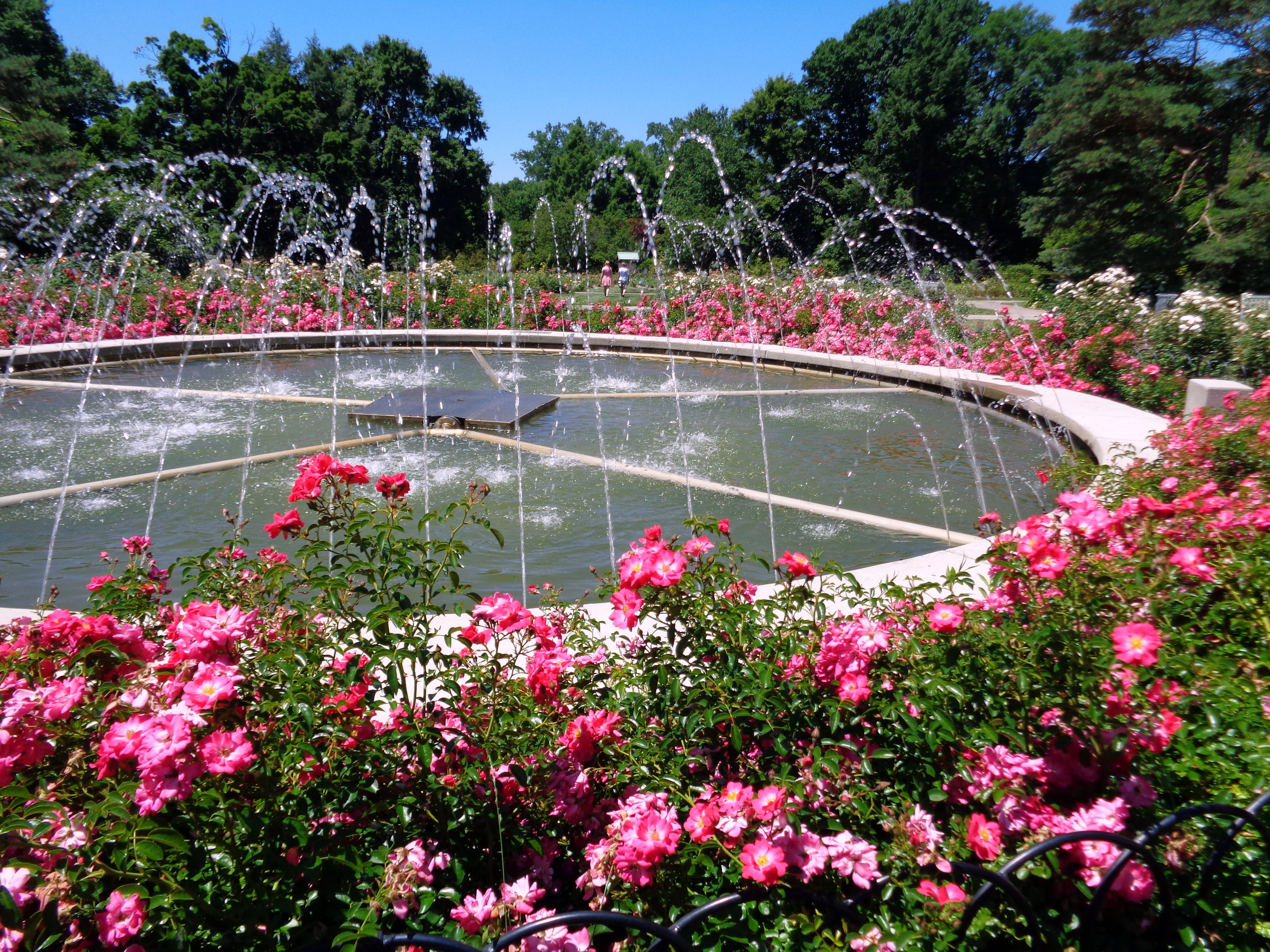 Whetstone Park Of Roses In Clintonville Ohio Inner