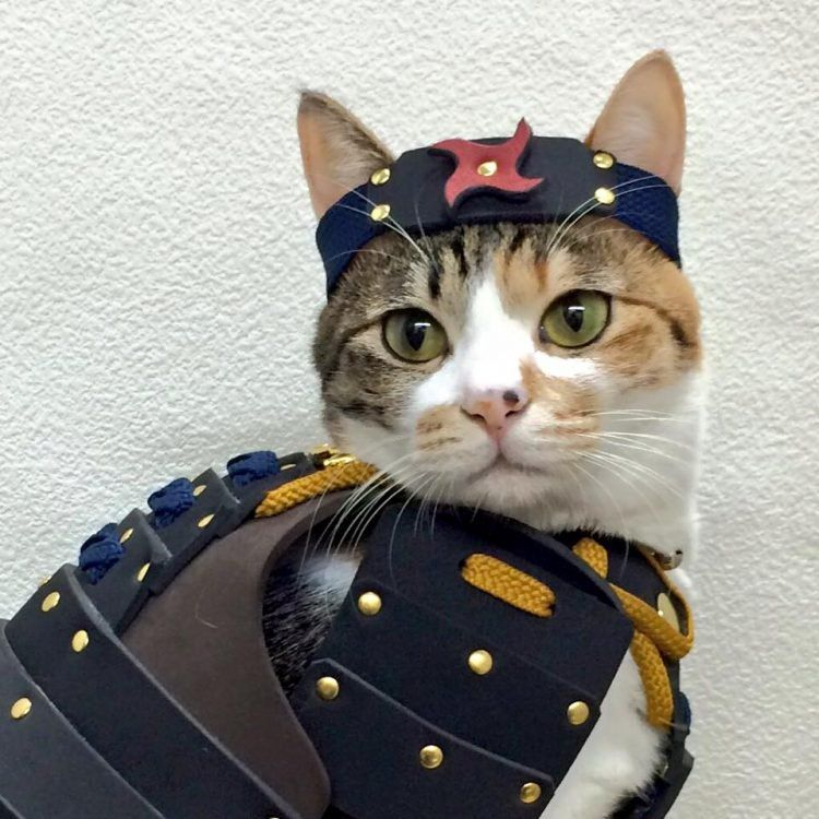 Japanese Company Makes Custom Samurai Armor for Cats and Dogs - Ever wonder what your pet would look like as a Japanese samurai? Well, thanks to this company selling samurai armors for cats and dogs, you don't have to imagine it anymore.    Samurai Age specializes in handmade …